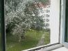 Blick aus der Küche zum Hinterhof (1)
